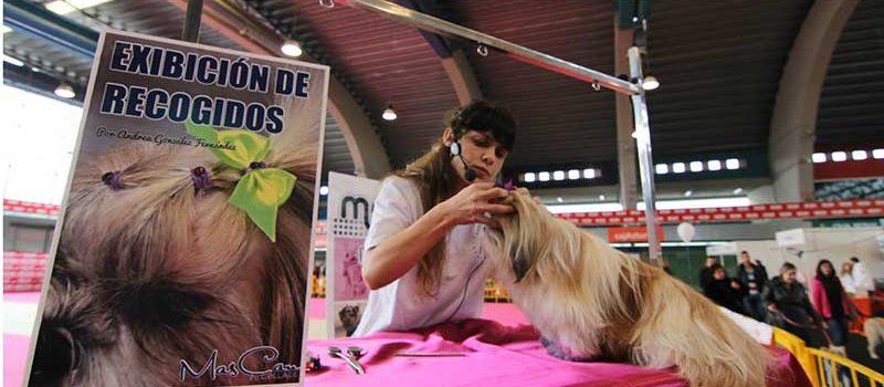 Curso Avanzado de peluqueria canina y felina - certificacion k9 - oviedo