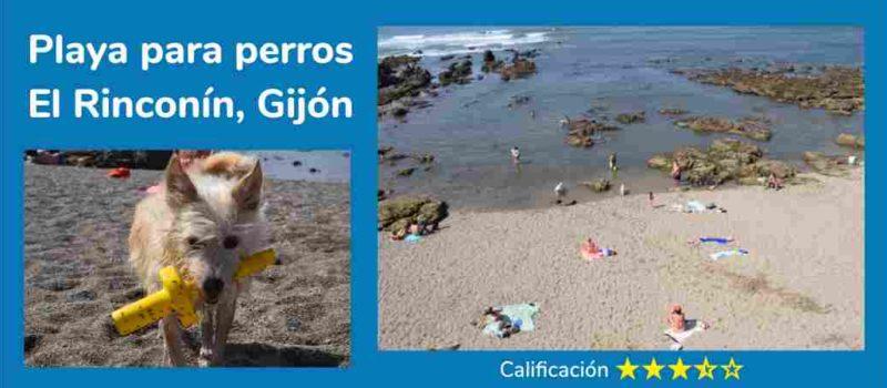 """Playas para perros en Asturias. """"El Rinconín"""" Gijón."""