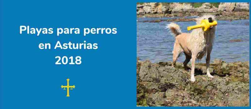 """Playas para perros en Asturias. """"Viajar con perro"""""""