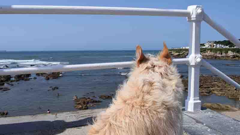 Flipa cotilleando la playa para perros del rinconín