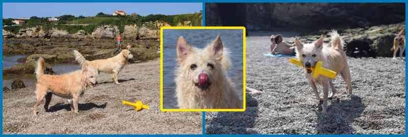 La playa es de arena gruesa. Hay muchos perros y el ambiente es muy bueno