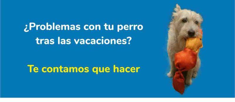 ¿Tienes problemas con tu perro tras las vacaciones? Te contamos lo que hacer