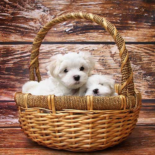 Perros en Adopción - Mas Can Tienda de animales Oviedo