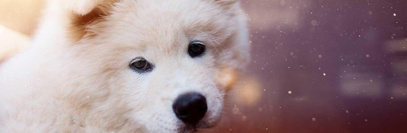 Perros en Adopción - Mas Can Oviedo