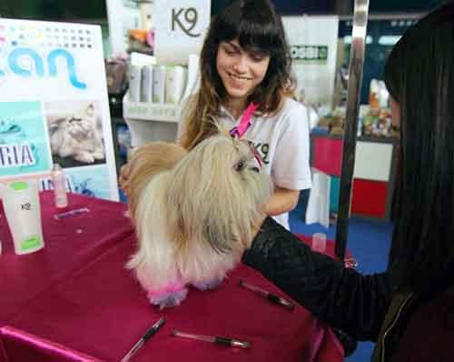 Andrea - Peluquera de Perros y Gatos - Tienda de Animales Asturias