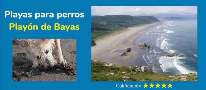 La playa de Bayas es una de las 3 playas para perros de Asturias.
