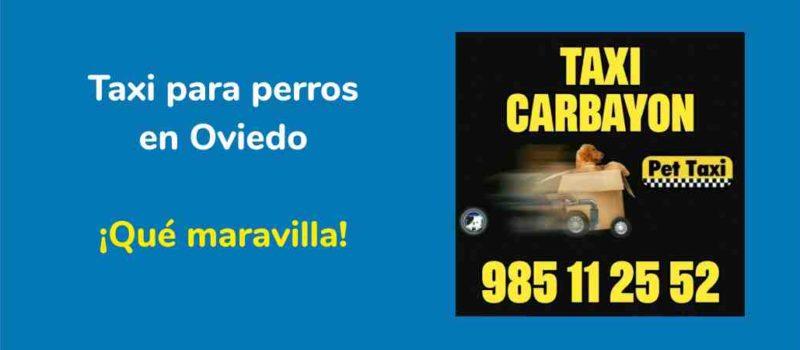 Taxi para perros en Oviedo. Que maravilla.