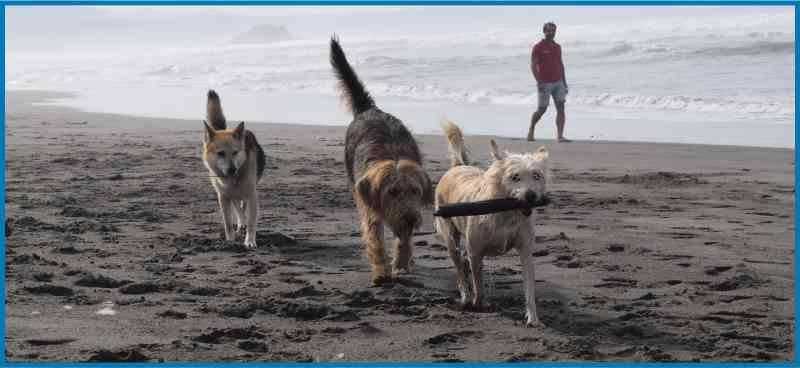 Enseguida encontrarás perros amigos en la playa de Bayas