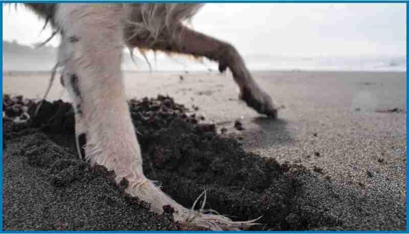 La arena de la playa de bayas es de arena muy oscura, igual que las playas de toda la zona.