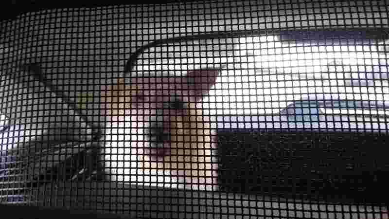 El servicio de taxi para mascotas dispone de todos los elementos de seguridad.